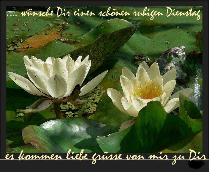 awww.abnehmen_aktuell.de_images_abnehmen_bilder_2010_08_38d8c039_1.jpg