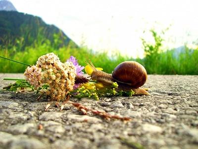 Bin unterwegs mit `nem Blumenstrauß.jpg