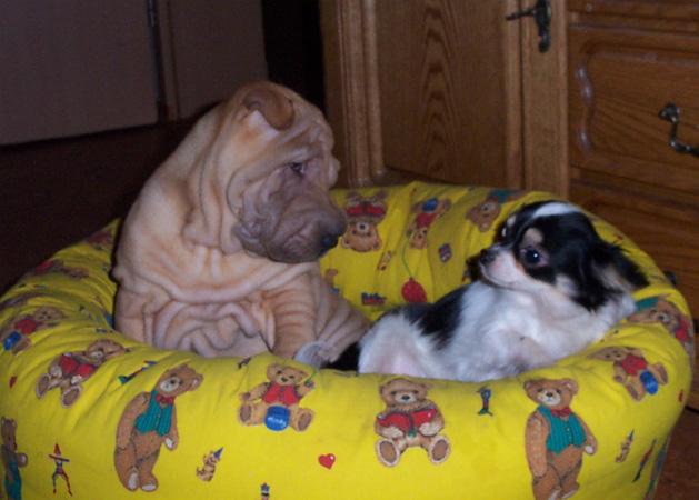 Cooper und Winston.jpg