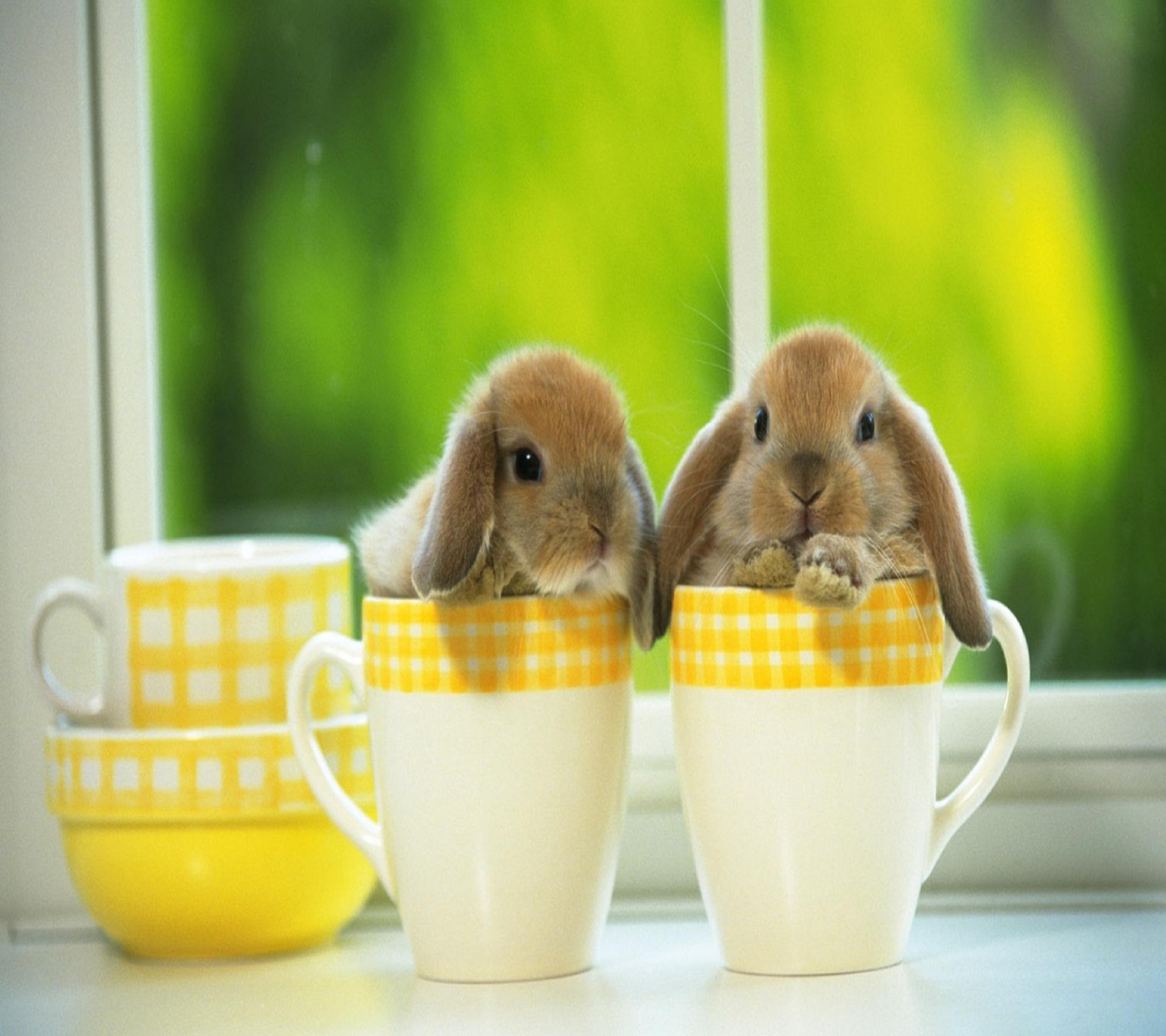 Cute_Bunny-wallpaper-10560677.jpg